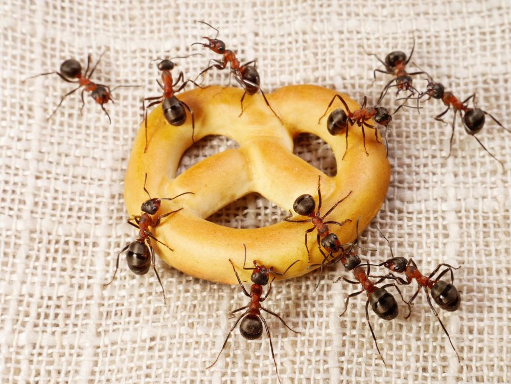 Ant removal in Stony Brook, NY