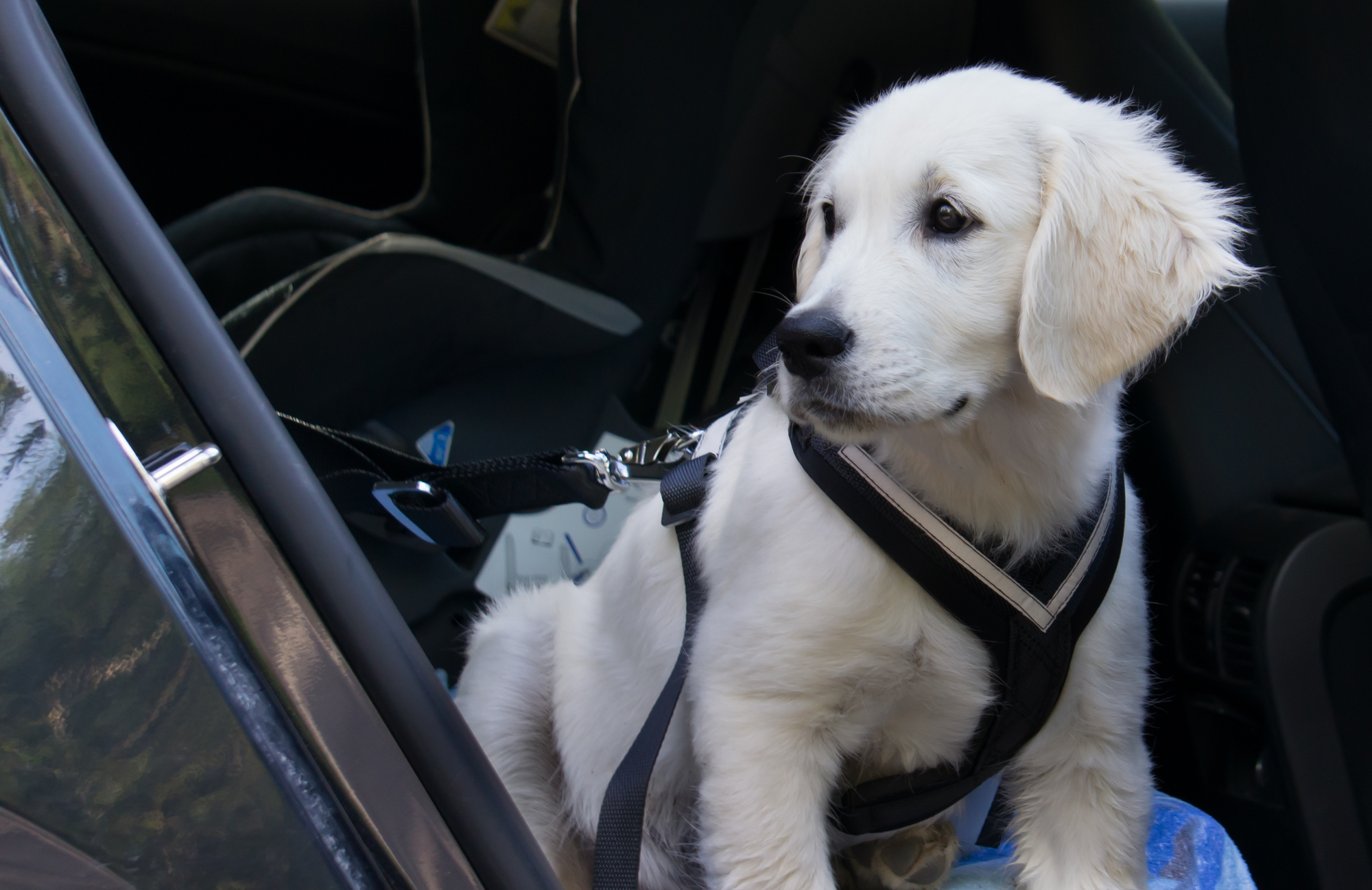 How To Keep Your Dog Safe While Traveling In A Car Tracy S