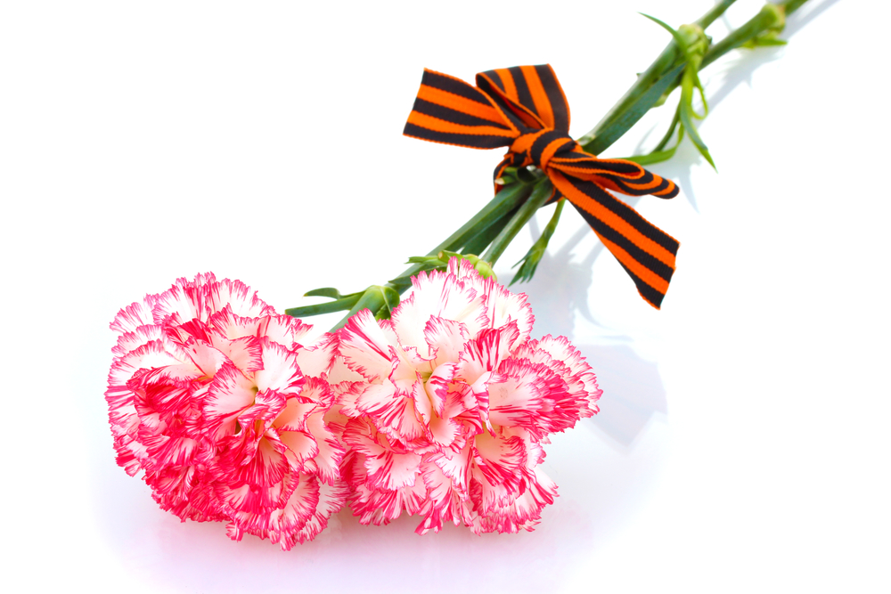 pink is one of the most common colors of carnations available and can be found in many different shades to suit various occasions within the pink family - Carnation Flower Colors
