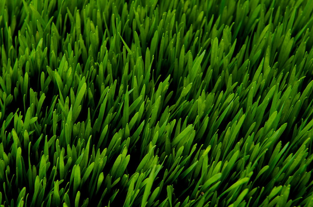 How to choose the best grass seed for your lawn turpin for Best grass for garden