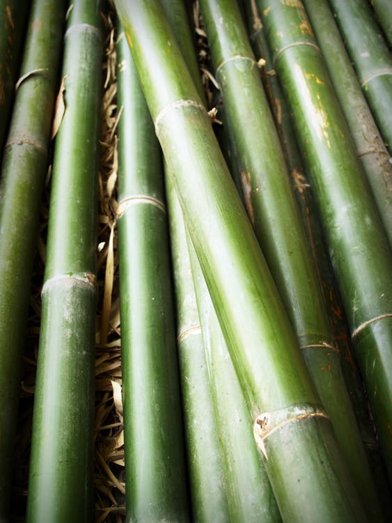bamboo remediation