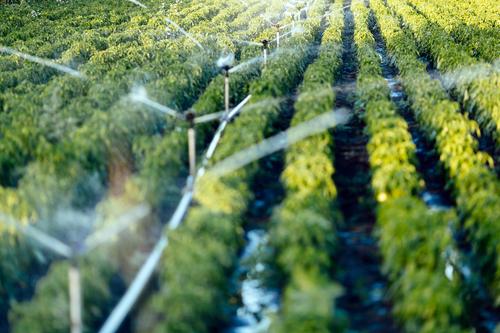 commercial irrigation Glennville GA