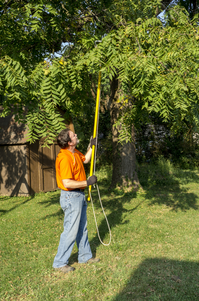 tree pruning equipment