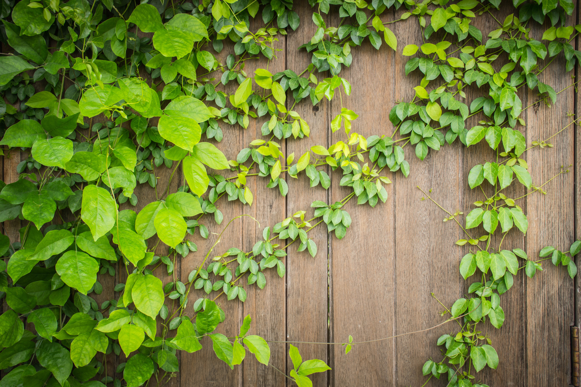 3 Tips To Choose Climbing Plants For Your New Fence Installation