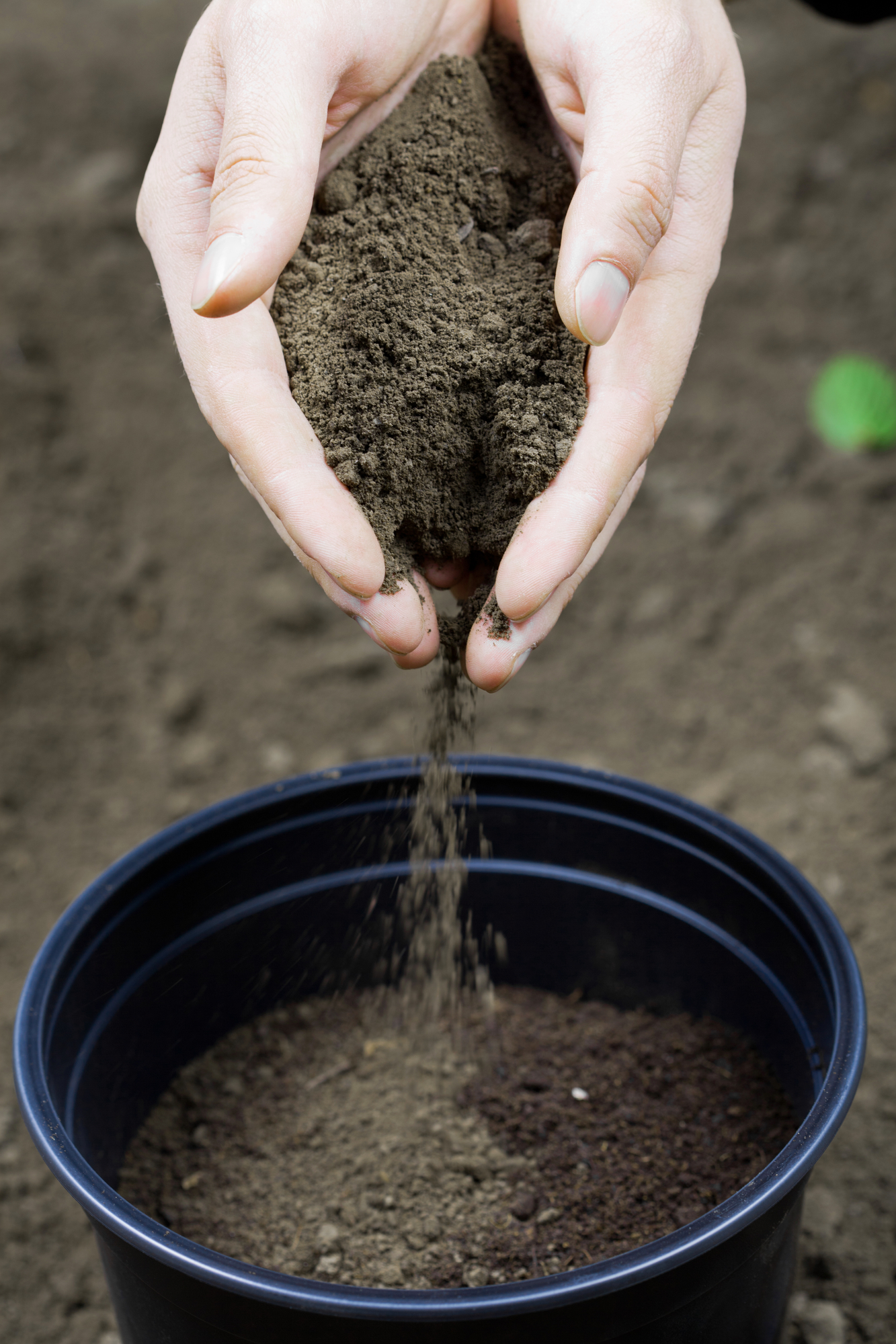 Your Guide to Buying Lawn Fertilizers - T & N, Inc