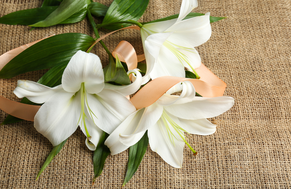 Top local florist shares the best in season flowers for fall a lone decoration or in a multi flowered bouquet the beauty of lilies is impossible to ignore with a color spectrum ranging from elegant white to bold mightylinksfo