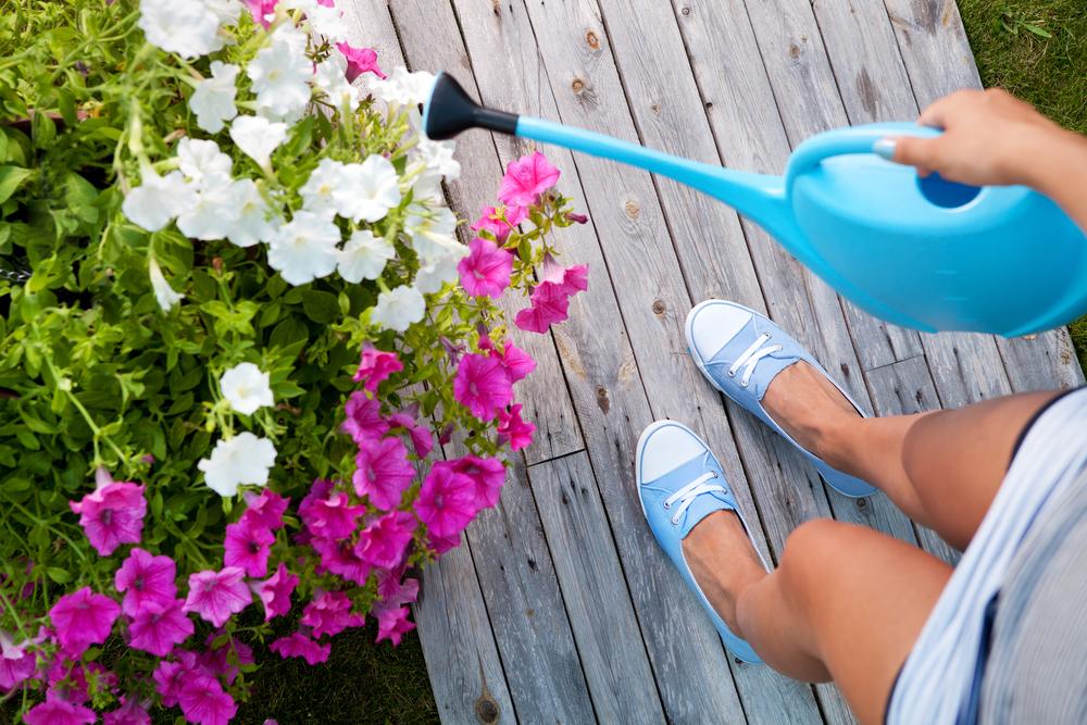 4 essential summer gardening tips garden exchange hilo nearsay - Summer time gardening tips ...