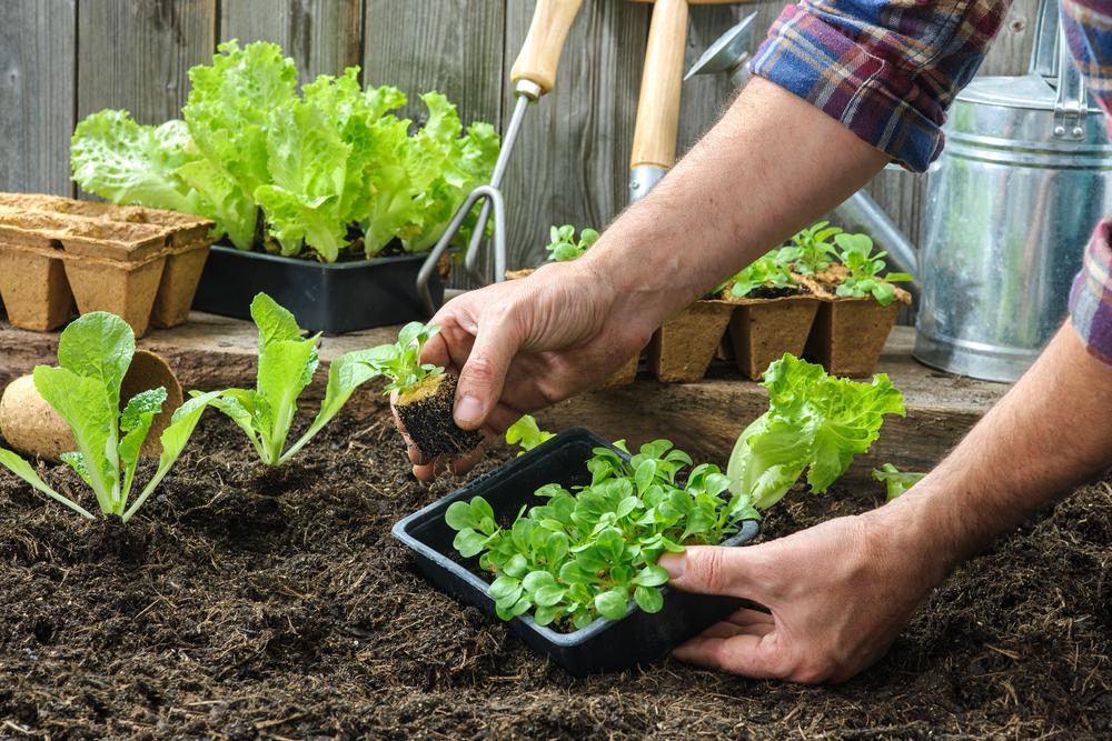 Gardening Fairfield OH