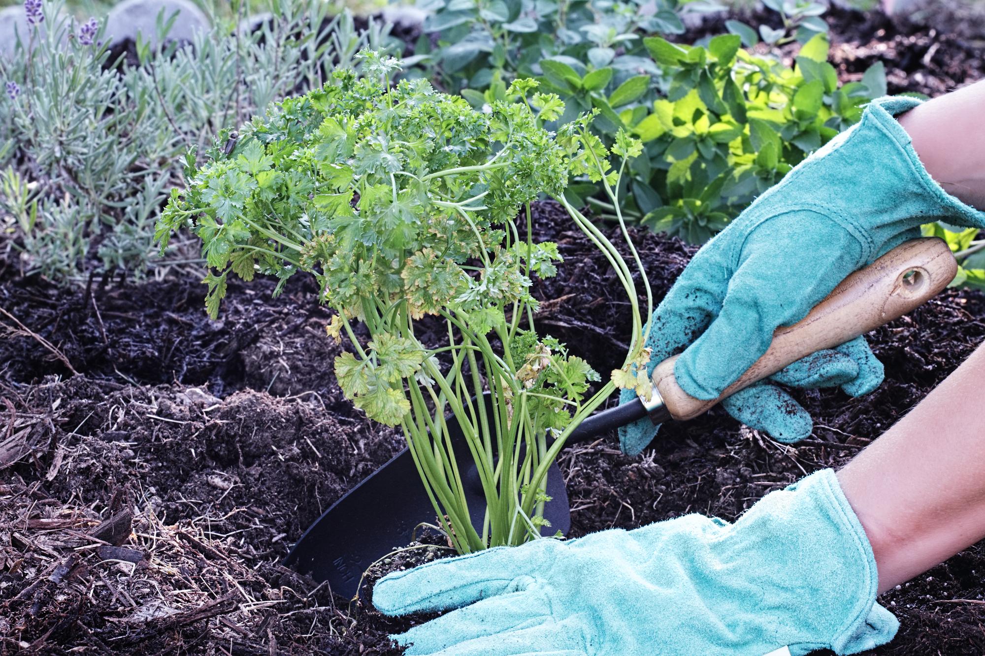green roof soil