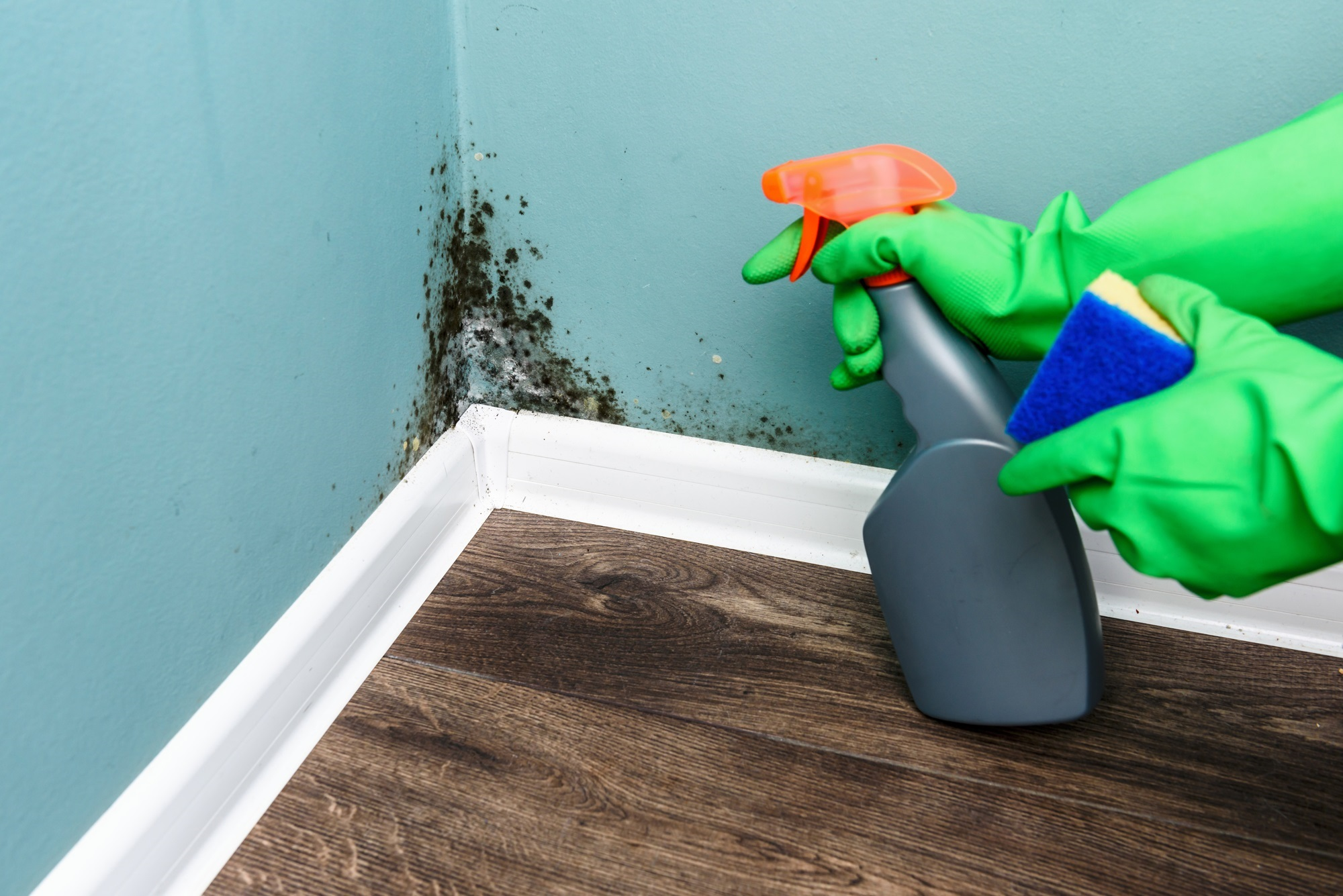 4 Steps in a Mold Inspection - AirCare Hawaii - Honolulu