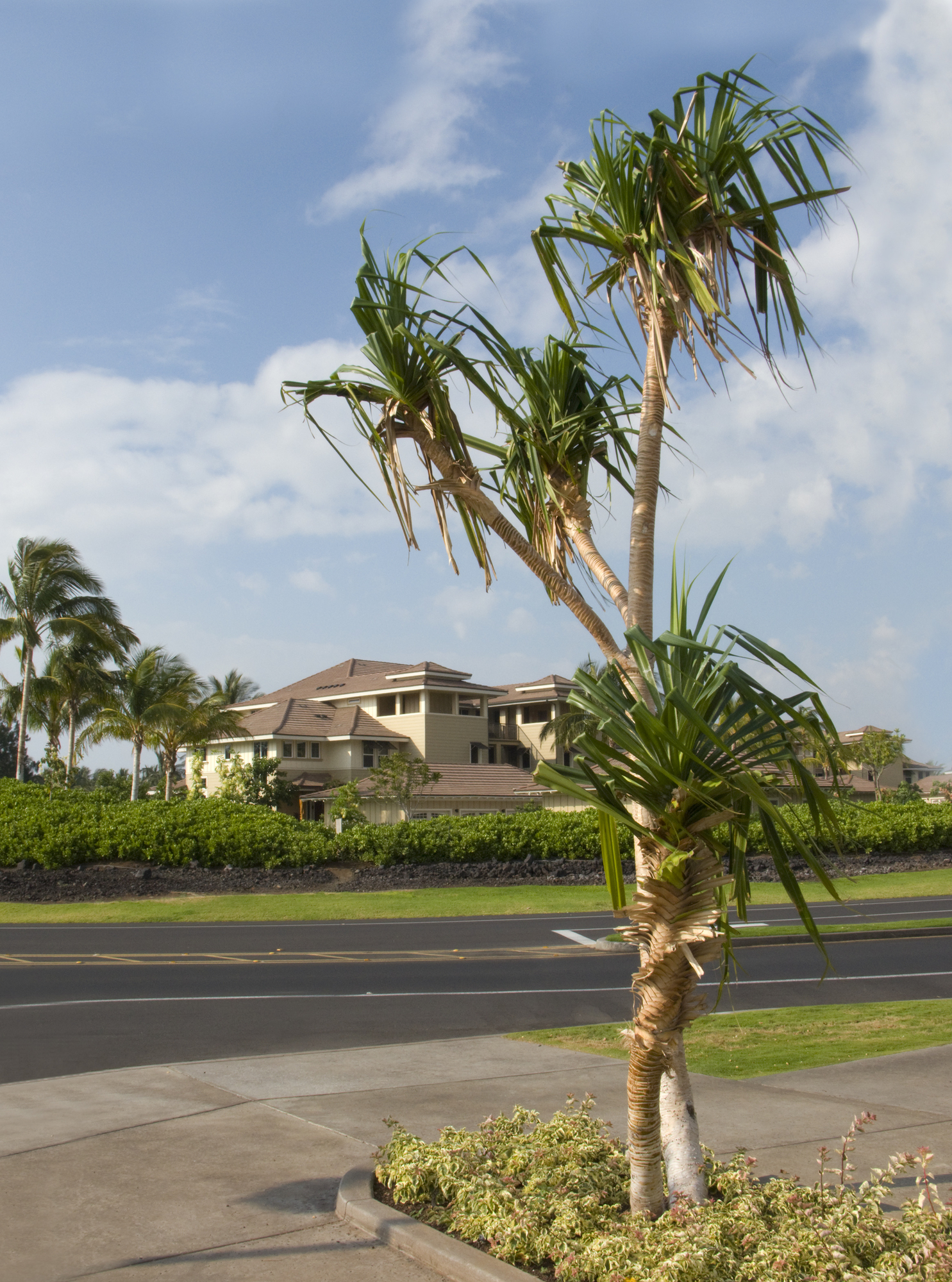 Honolulu, HI tree service