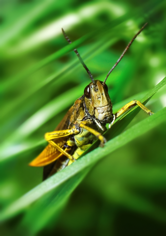 Keep Pests Off Your Lawn with These Insect Control Tips ...