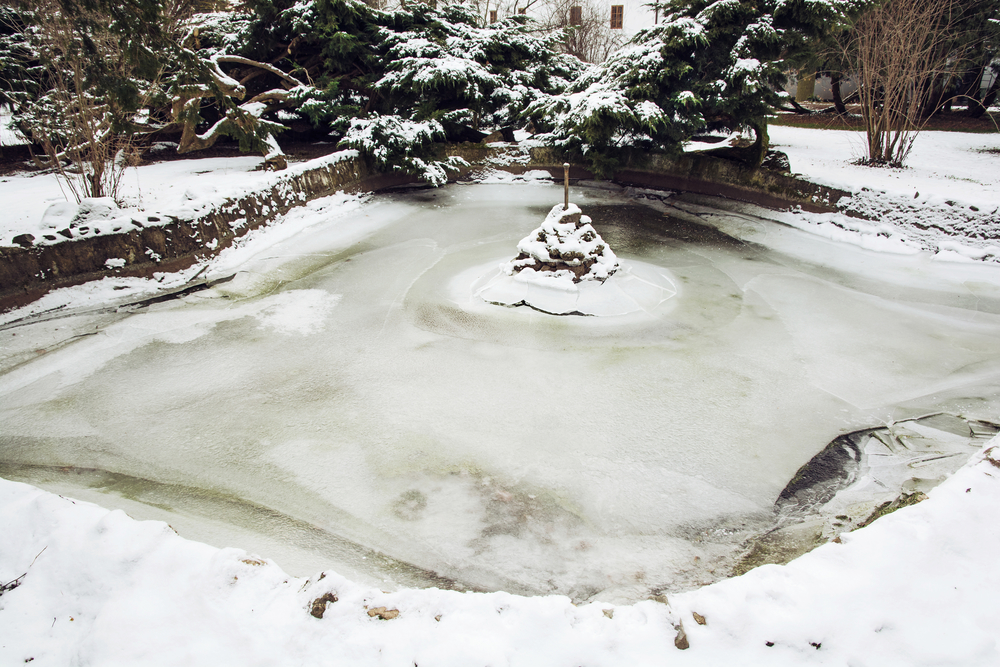 How to prepare your koi pond for the winter specialty for Fish pond preparation