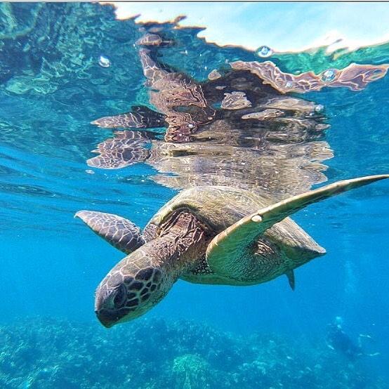 Lahaina, HI snorkeling
