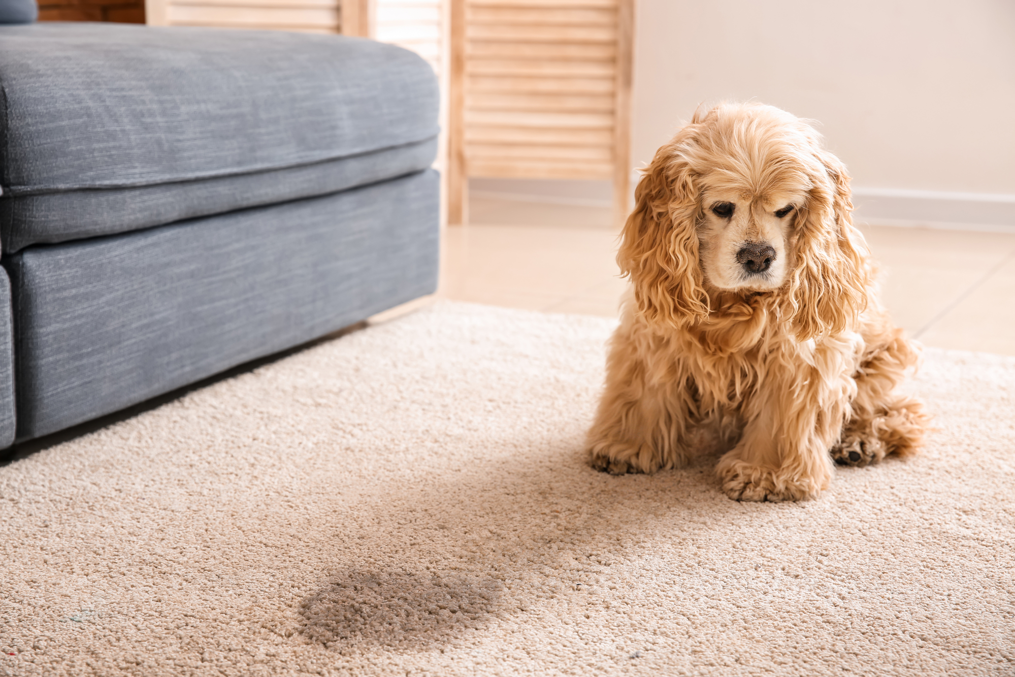 pet stain