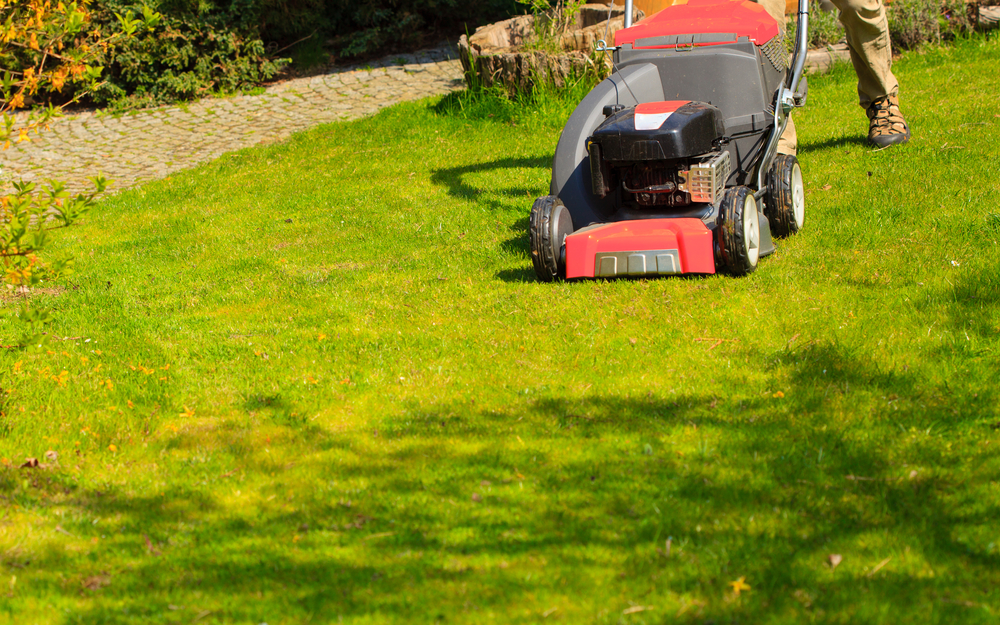By Applying A Herbicide At The Beginning Of Spring, You Can Eliminate Weeds  Before They Spread All Over Your Property. Because Some Species Of Invasive  ...