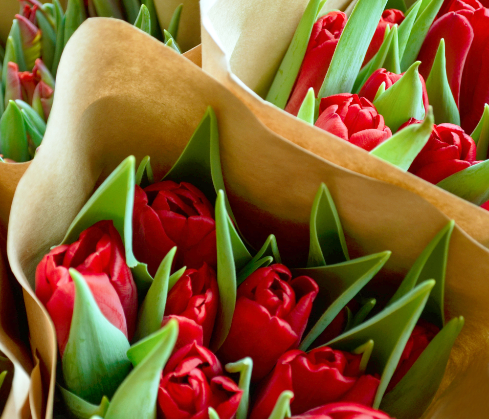 What Do the Colors of Flowers Represent? - Stein\'s Flowers & Gifts ...