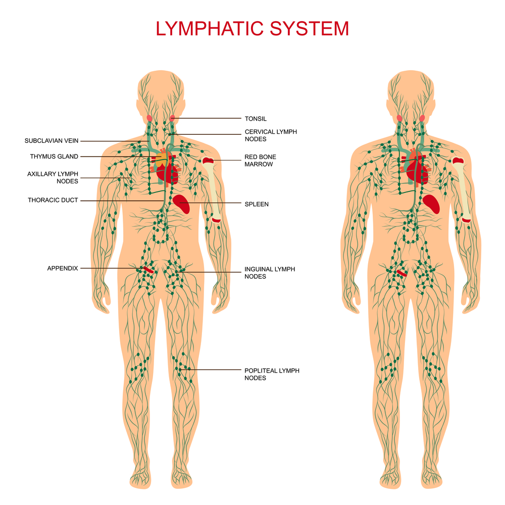 massage therapy is commonly confused with manual lymph drainage, but the  two treatments utilize different techniques  more pressure is applied  through the