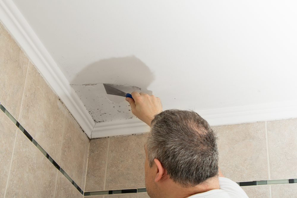 What Is Mold Removal Why It Diffe From Cleaning The Walls