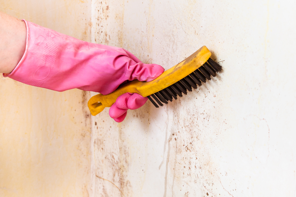 a brief guide to mold remediation america s best cleaning restoration services rochester. Black Bedroom Furniture Sets. Home Design Ideas