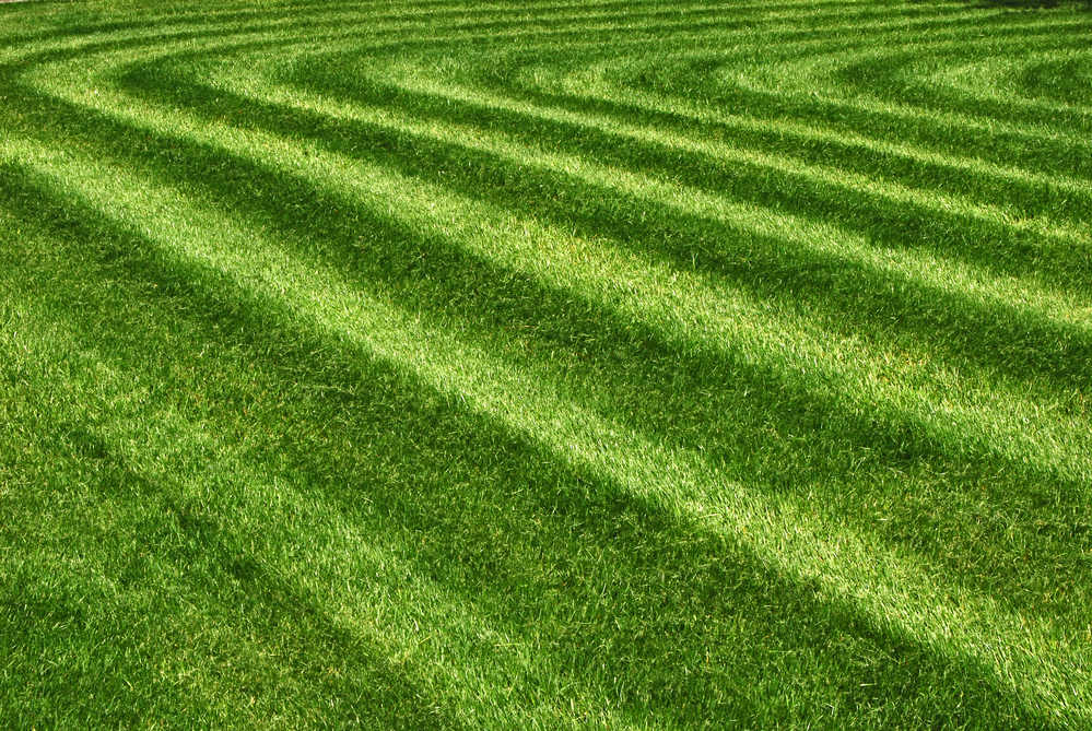 lawn mowing companies