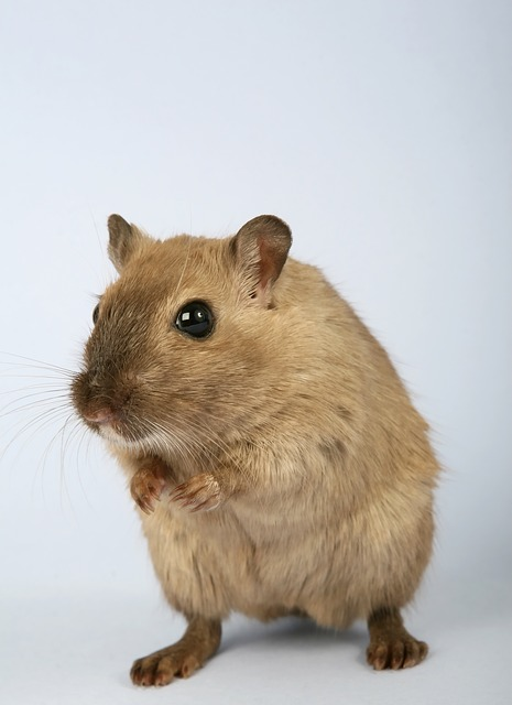 5 Signs You May Need A Rodent Control Service Inside Out