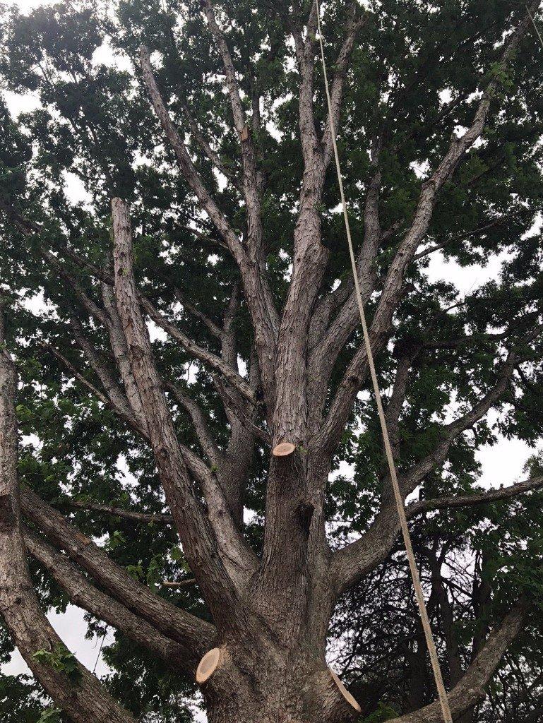New London, CT tree service