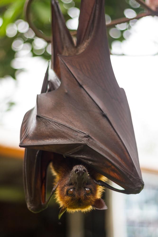 New Milford, CT bat control