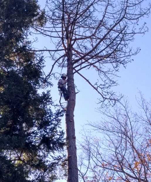 newburgh tree pruning