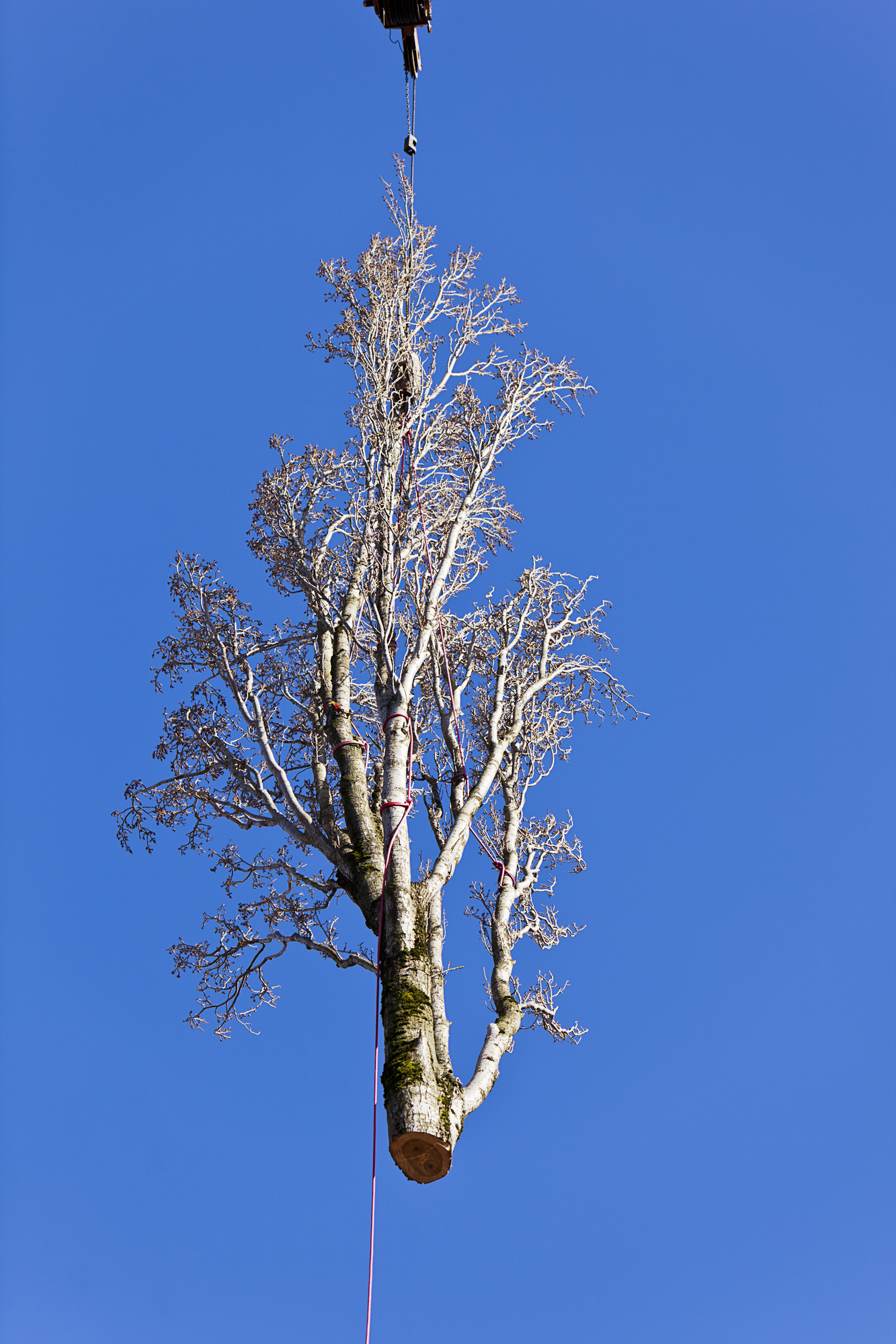 Nicholasville, KY tree removal