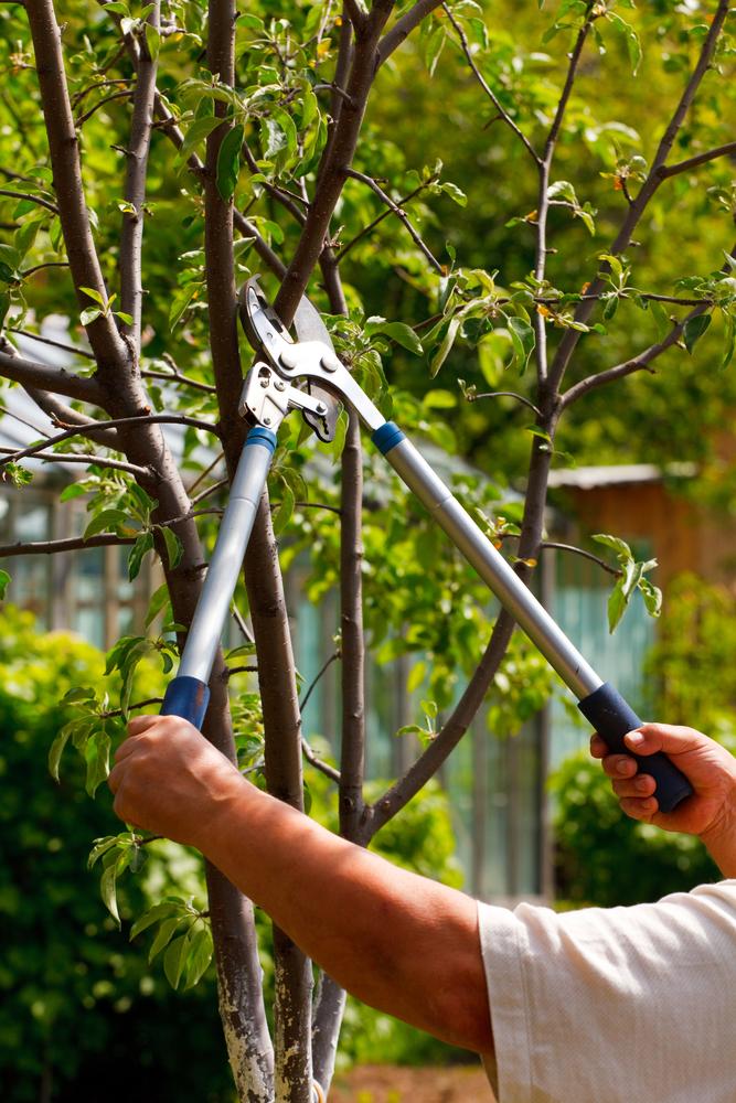 Oak Ridge, NC tree trimming