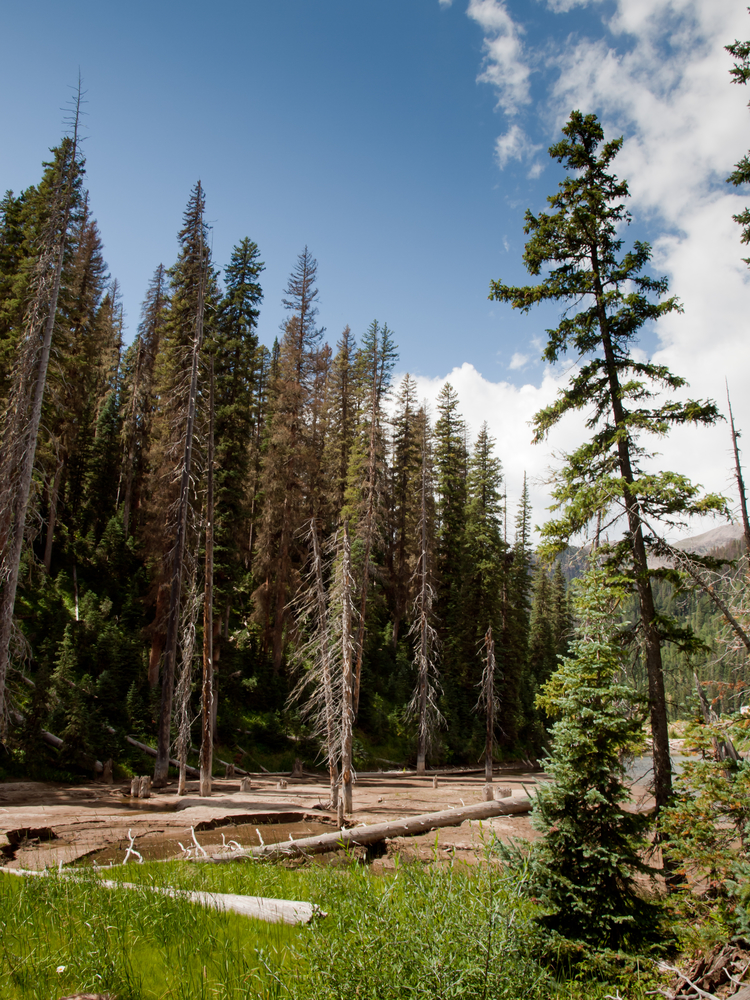 10 packing tips for solo trips family vacations for Fireside cabins pagosa