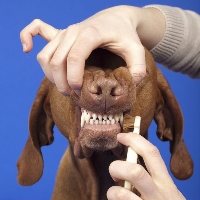 Pet Dental Cleaning