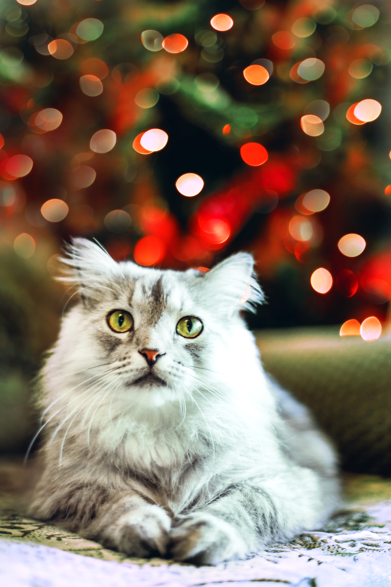 How to Keep Your Cat Off Your Christmas Tree - Almost Home Pet ...