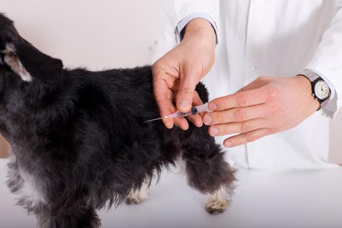 pet wellness exam