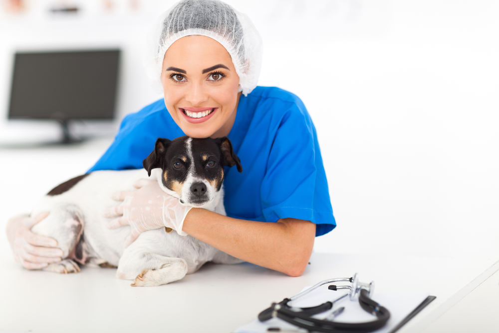 5 tips for choosing the right pet hospital   alexandria