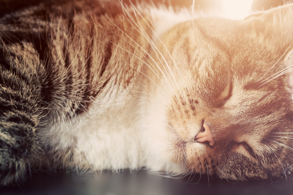A Guide to Honoring Your Pet\'s Memory After Their Passing - Paws ...