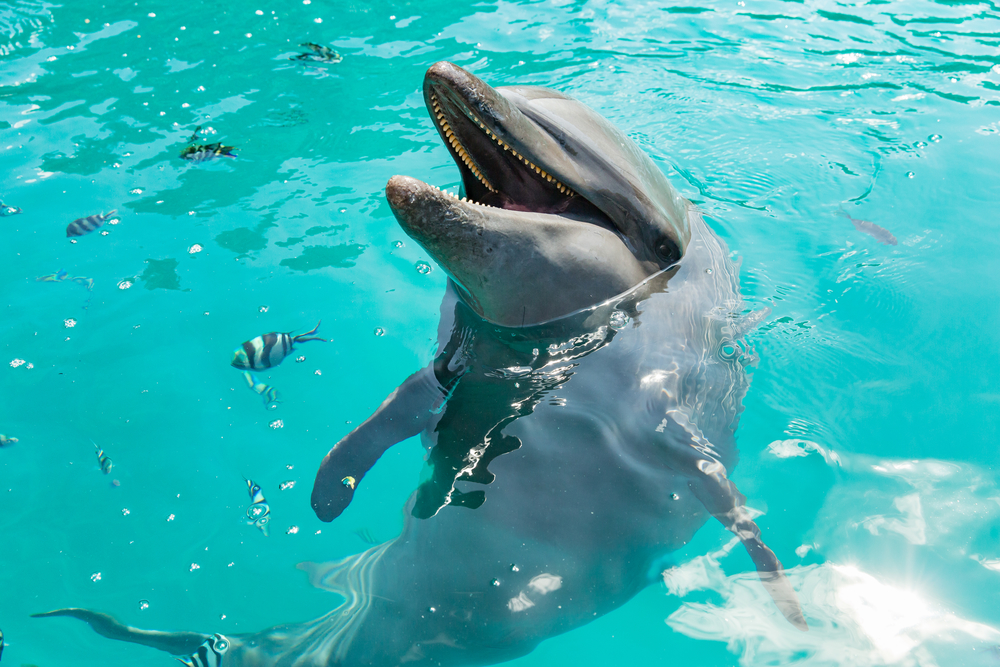 5 Dolphin Friendly Viewing Tips To Remember While Offshore Fishing