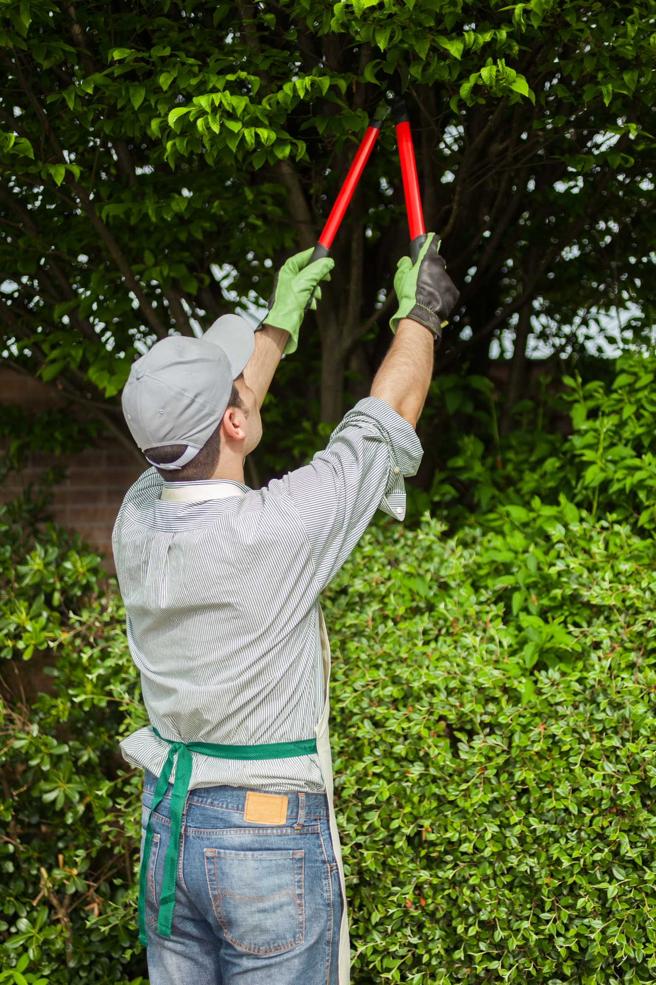 tree-pruning-KY