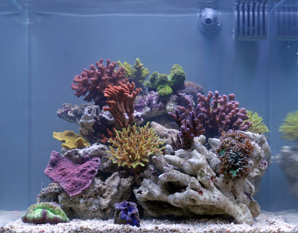 how to add more bacteria to saltwater tank