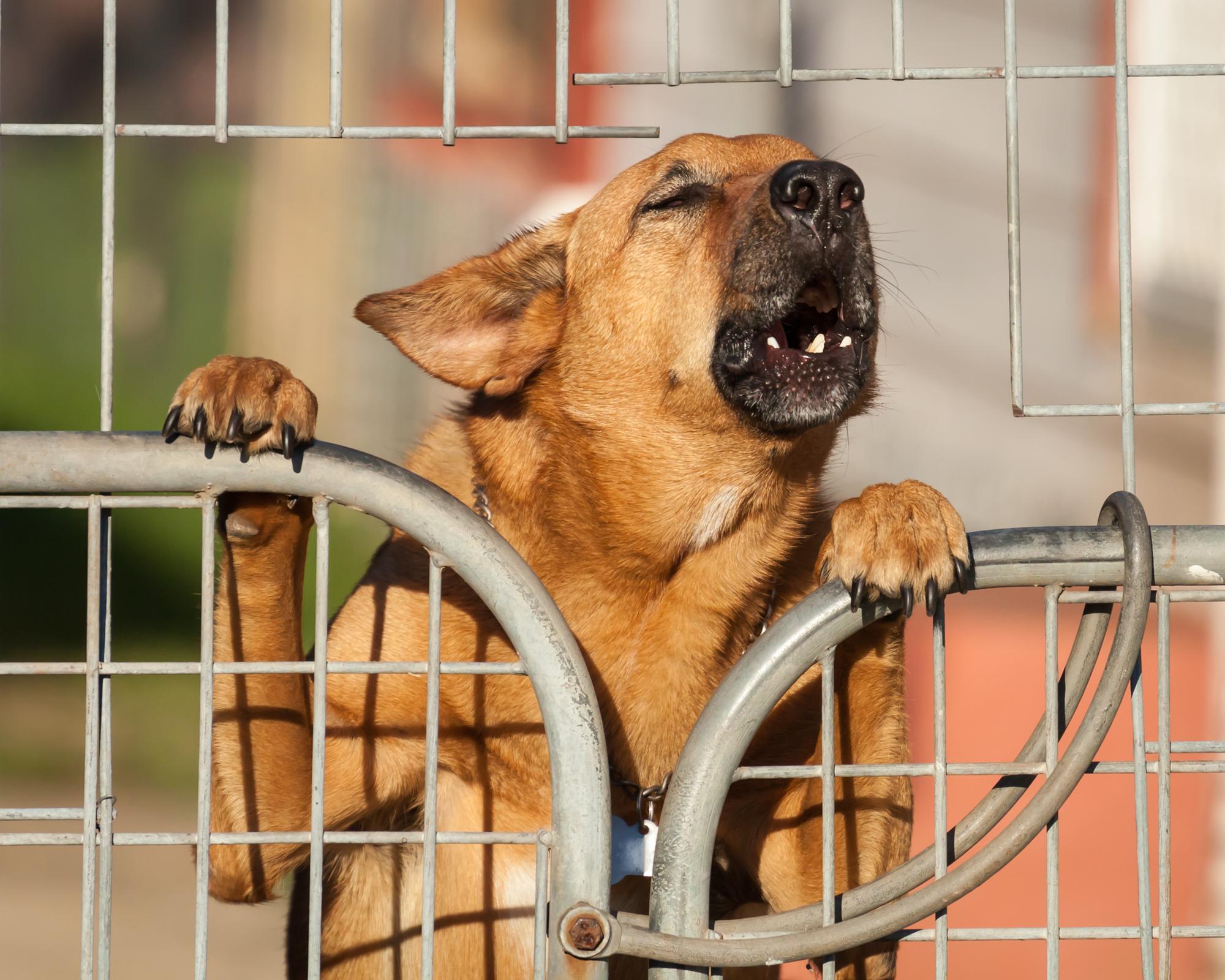 dog bite law