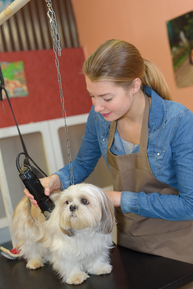 Top 4 tips for choosing a pet grooming salon a gentle for A gentle touch salon