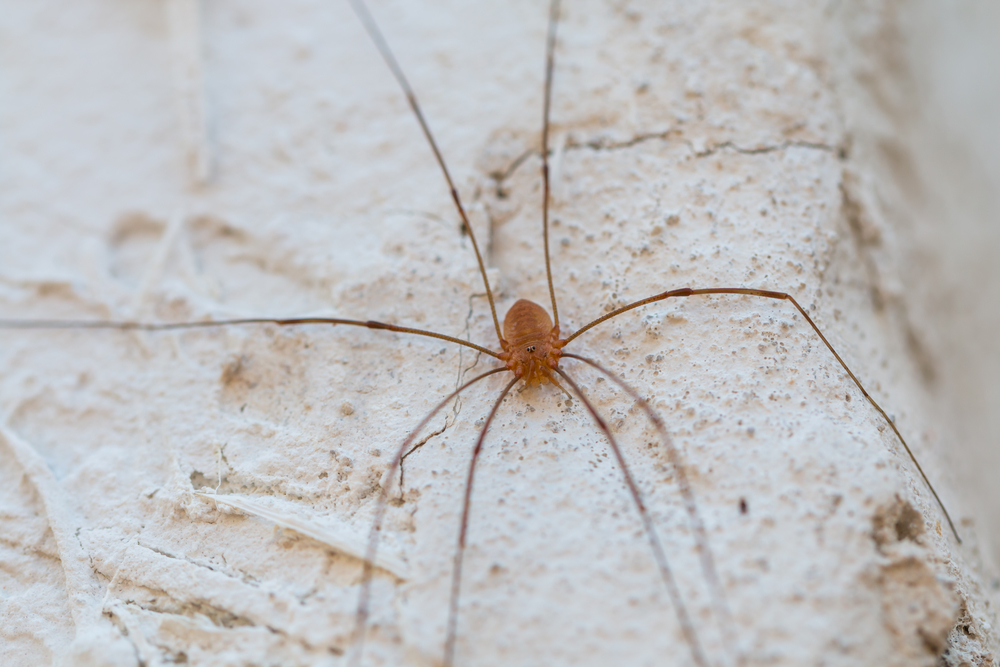 5 Natural Ways to Keep Spiders Out of Your Home Valley Pest Control Oshkosh NearSay