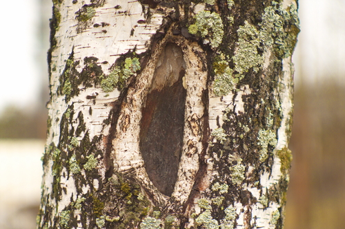 tree care for wounds