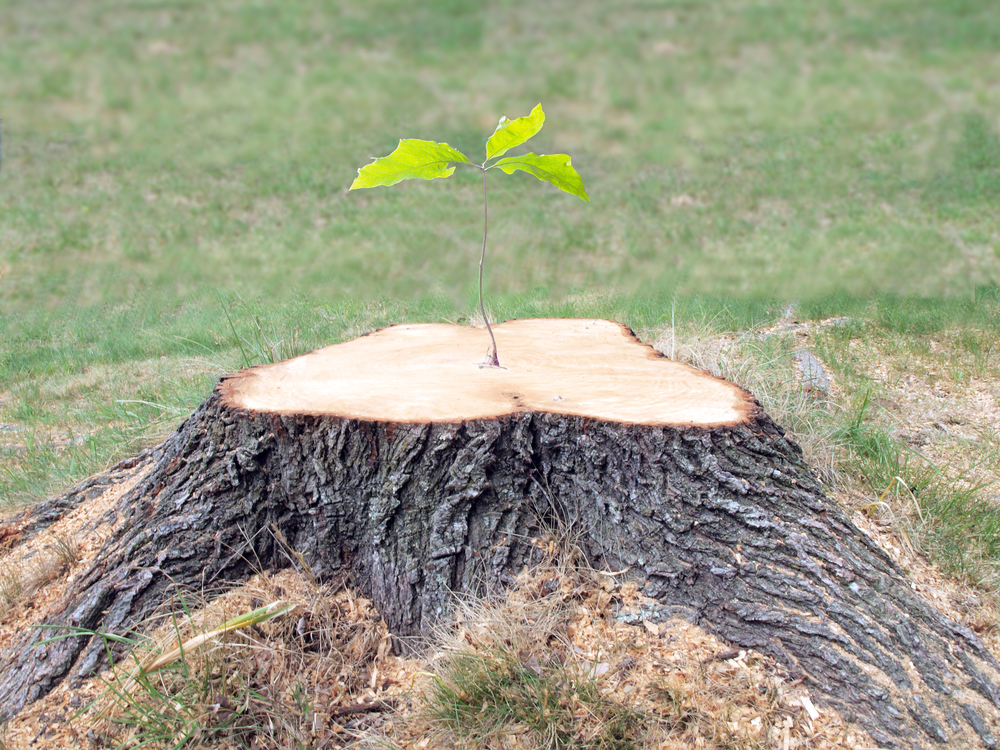 3 Reasons to Invest in Stump Removal