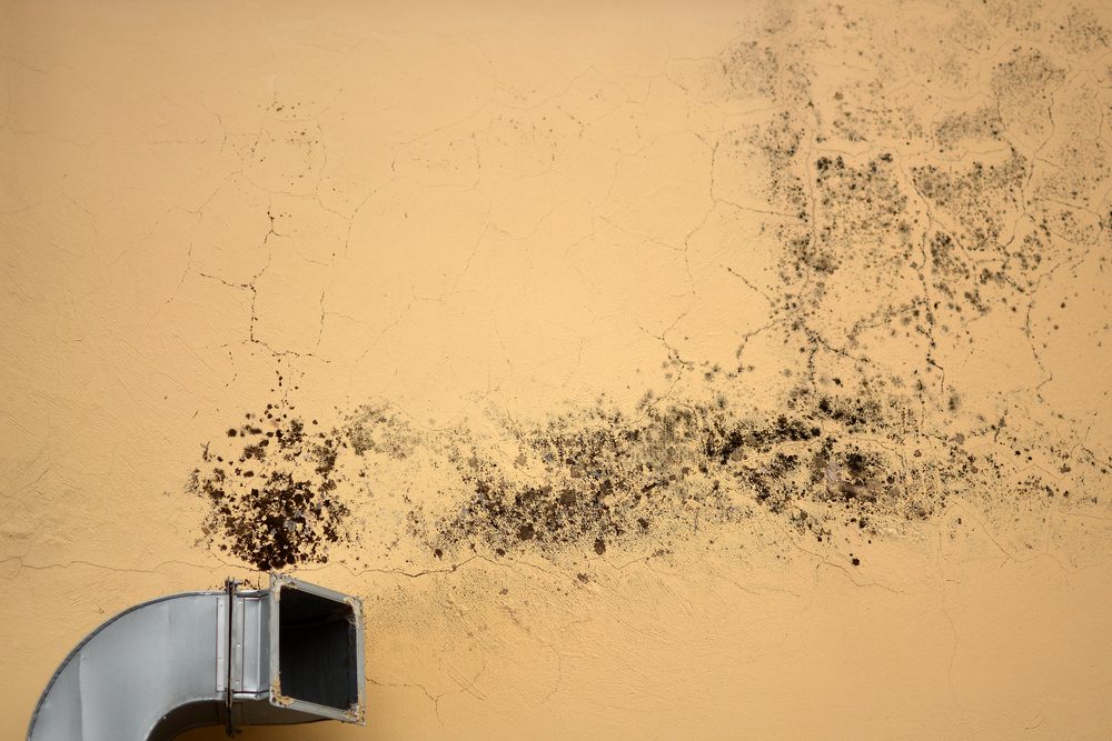 Why you need mold testing before spring hits taylor made home inspections union nearsay - Reasons always schedule regular home inspection ...
