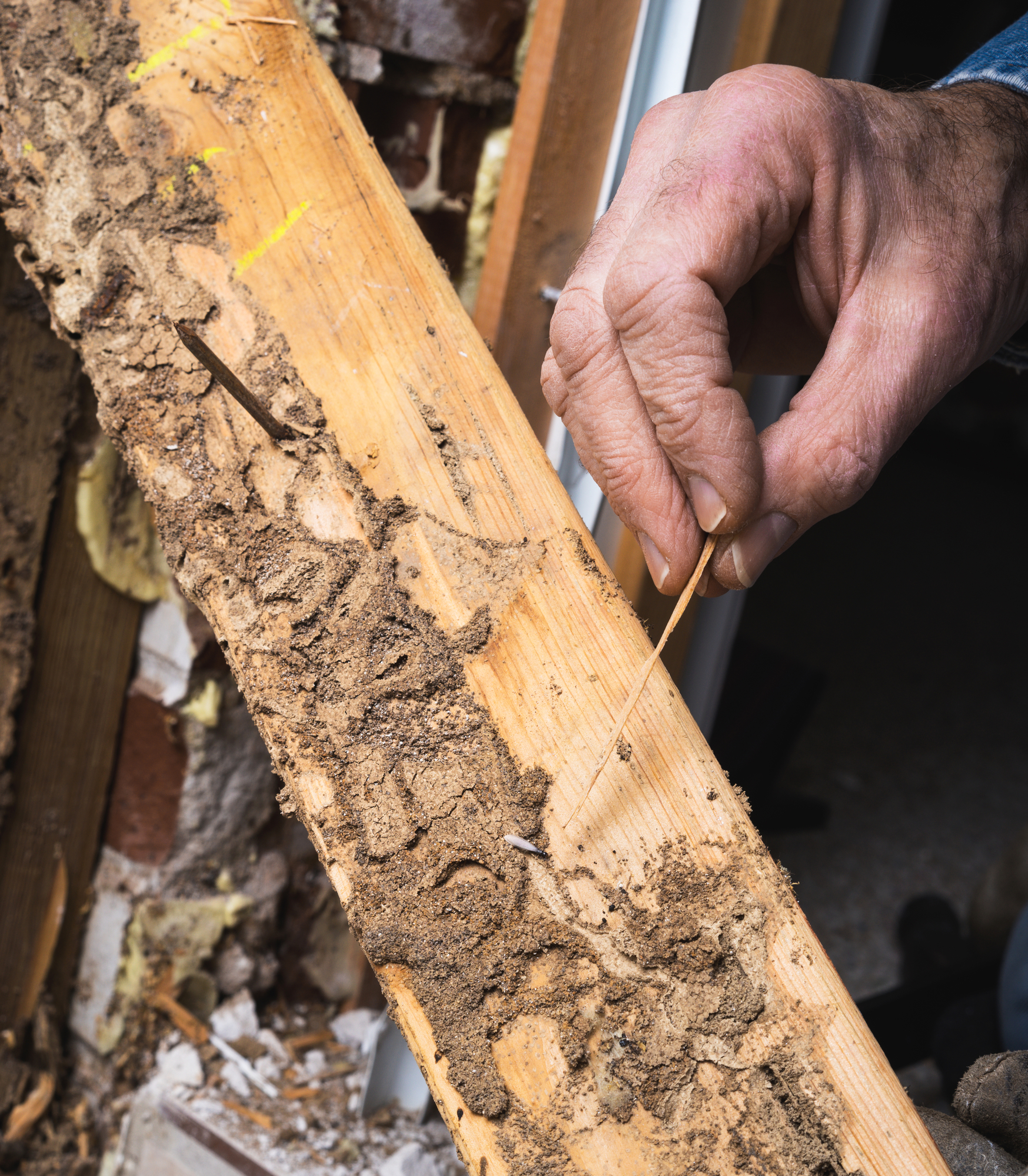 Honolulu S Termite Control Experts Explain The Difference