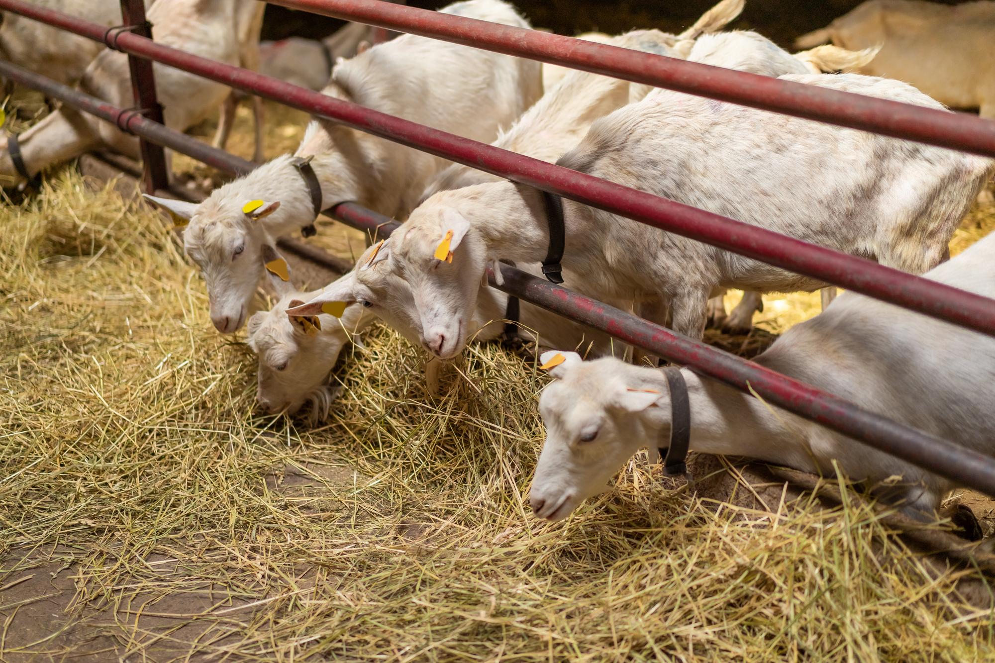 livestock feed distributors