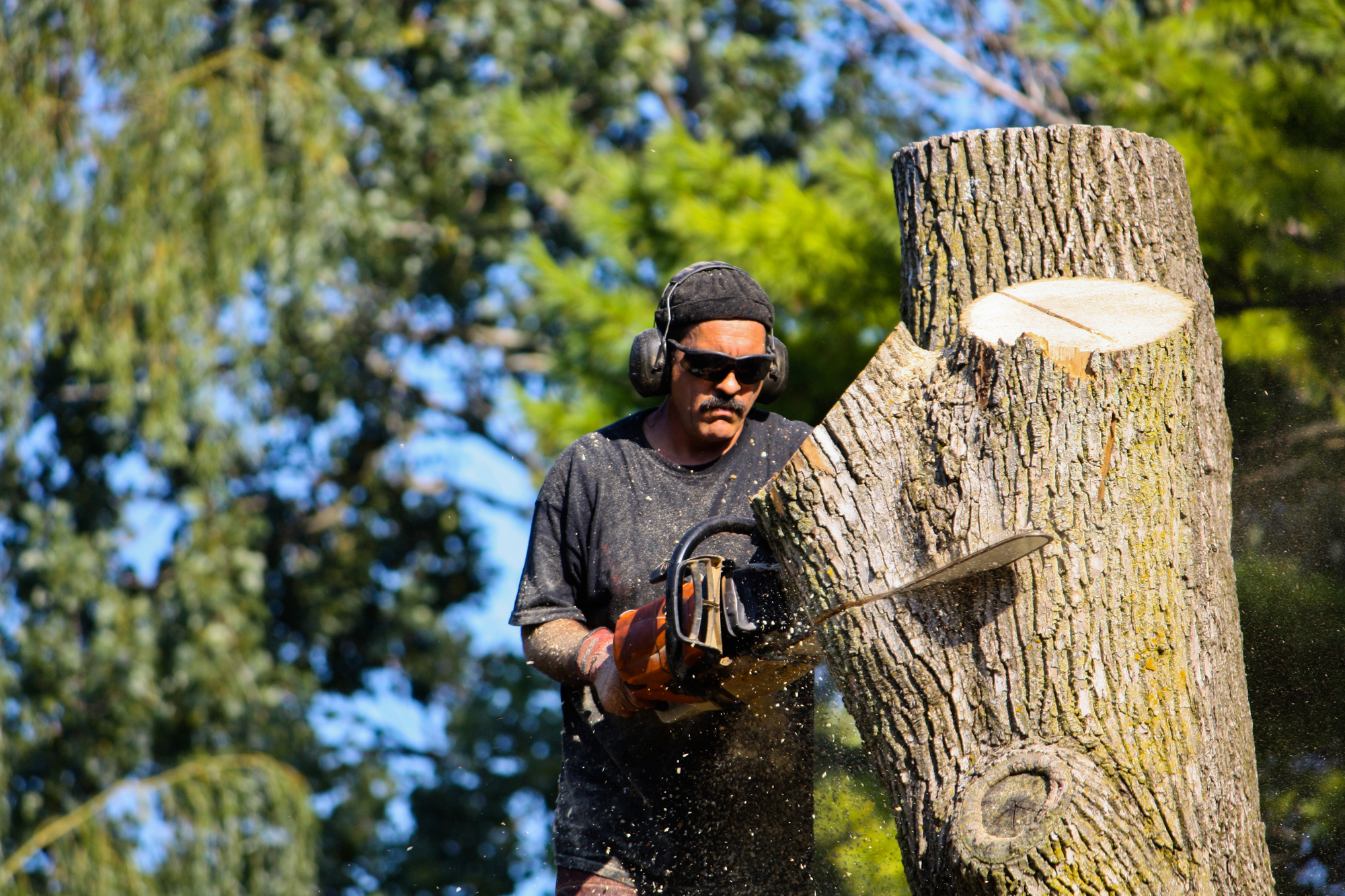 tree and shrub removal