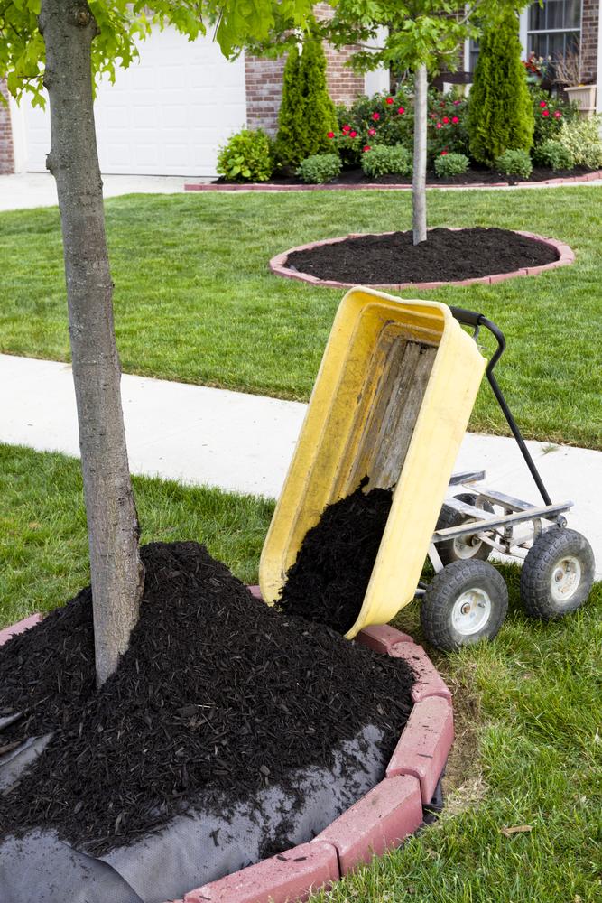 Tree care Troy MO